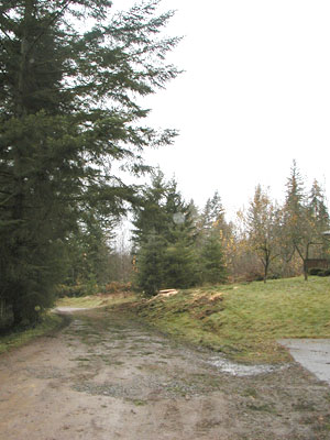 Tree Maintenance Service